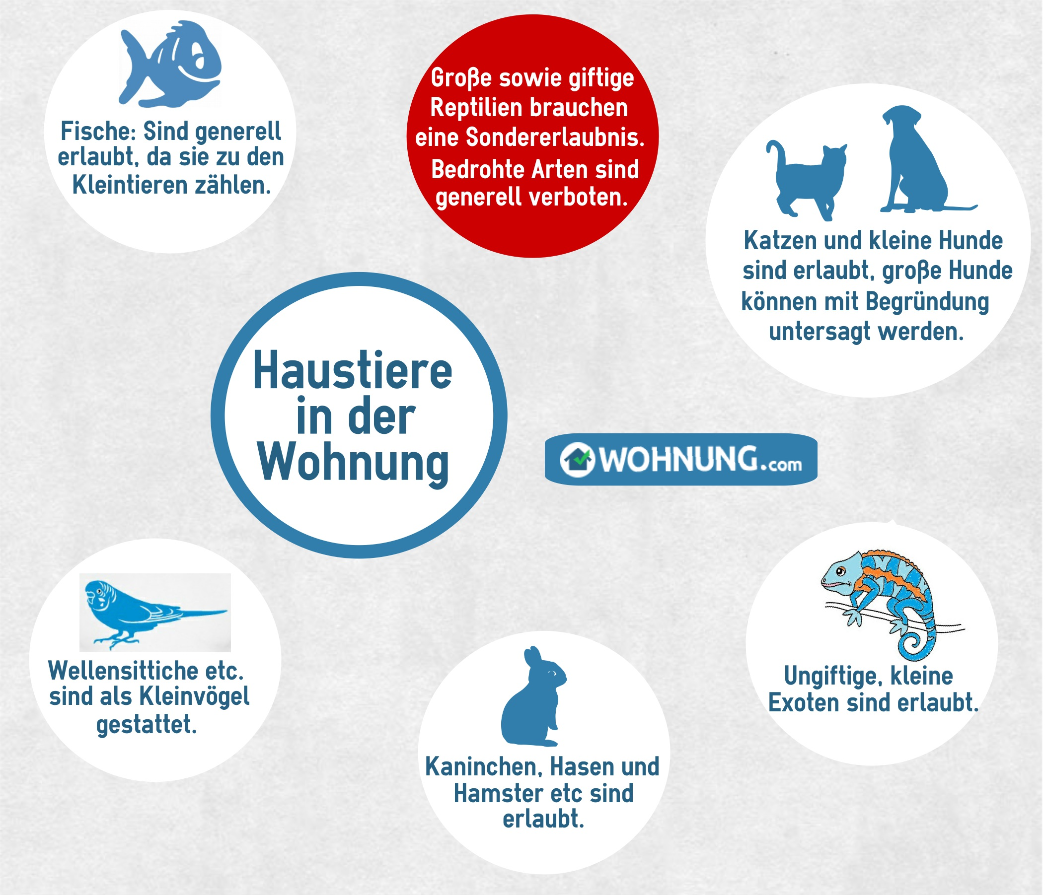 Wohnung Regelungen Zur Haltung Von Haustieren Wohnungcom Ratgeber